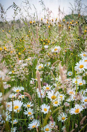 Fleurige lentebloemen in het gras van Fotografiecor .nl