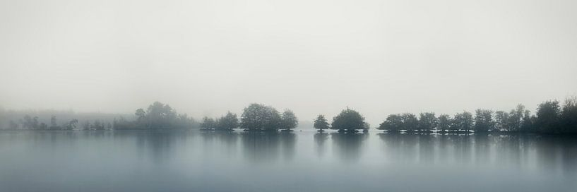 Rhythm of trees van Rob Visser