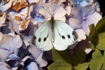 Schmetterling eins mit den Blumen von wil spijker