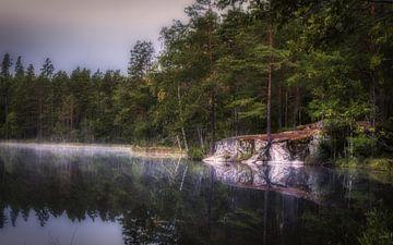 Een mooie rustig morgen in een mooi bos