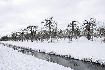 Obstgarten im Schnee von Ingrid de Vos - Boom