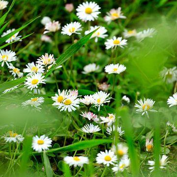Blumen im frühen Frühling von Marian Merkelbach