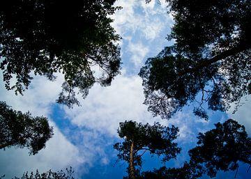 blauwe lucht van Bianca Brugge-De Wilde