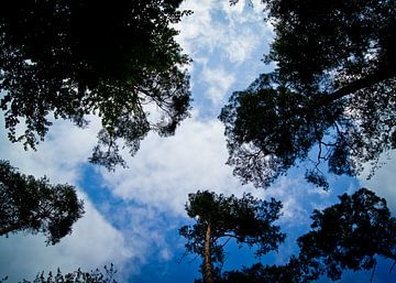 blauwe lucht sur Bianca Brugge-De Wilde
