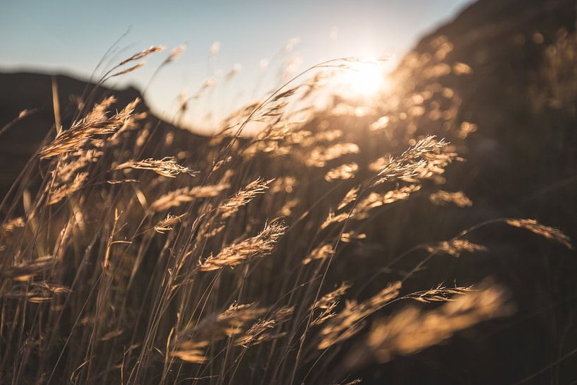 Through the grass van Mark Wijsman