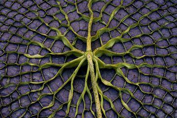 paars blad van