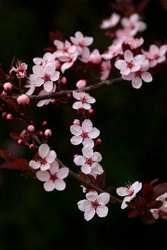 Frühlingserwachen von Thomas Jäger