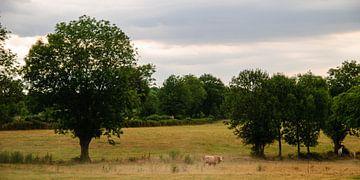 De koe van Sazeret van Martin Noteboom