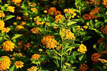 mooie bos gele bloemen von Gerrit Neuteboom
