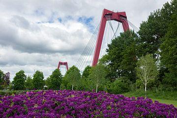 Willemsbrug Rotterdam von Rdam Foto Rotterdam