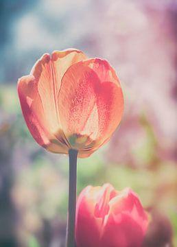 Blossom Gruga van Jakob Baranowski - Off World Jack