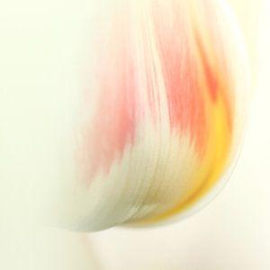 tulipa erotica van Elle Elskamp