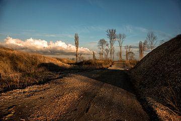Landscape VI van