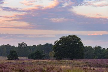 blühendes Heidekraut unter schönen Wolken von Tania Perneel