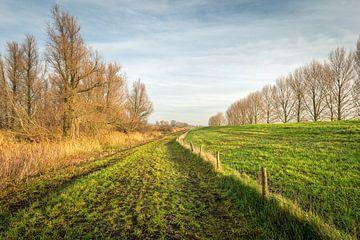 Niederländische Landschaft am Fuße des Amerdijk von Ruud Morijn