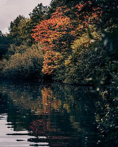 Herfst kleuren van Sander Spreeuwenberg