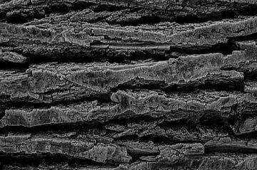 Boomstam van dichtbij met rijp en in zwartwit van