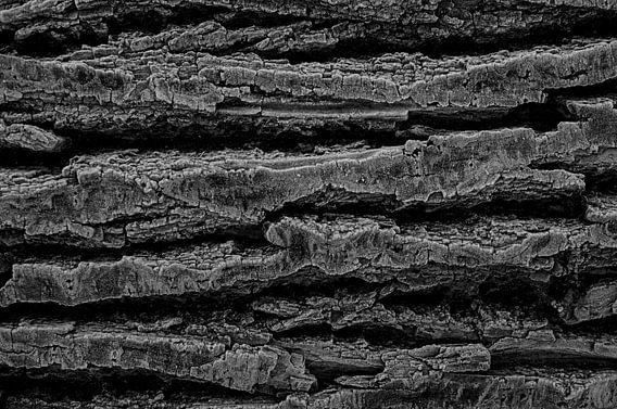 Boomstam van dichtbij met rijp en in zwartwit