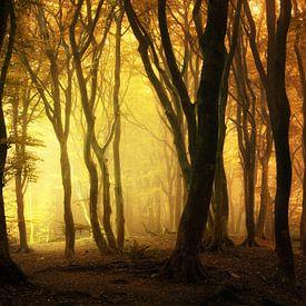 Speulderbos in de herfst van Martin Podt