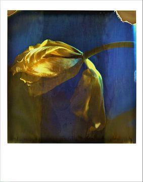 Gele tulp op polaroid van Lilian Wildeboer