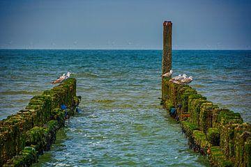 Brise-lames dans la mer