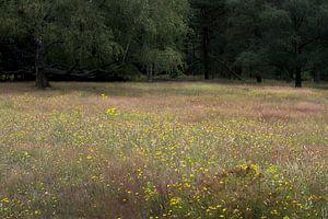 Bloemenzee van Miriam Duda