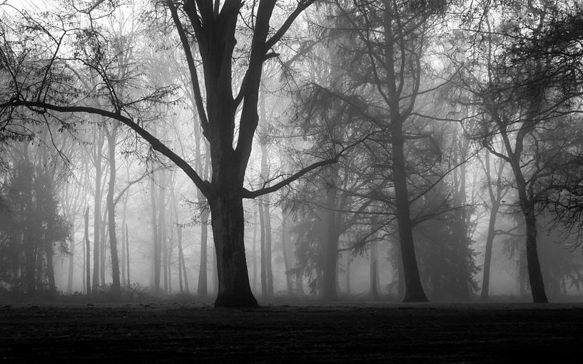 Misty Silhouettes Of Trees van William Mevissen