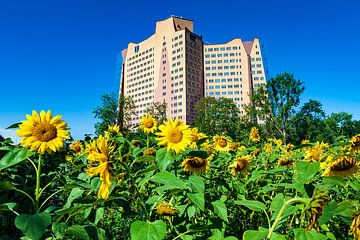 Die Gasunie Gebäude in Groningen, Niederlande, mit dem Vordergrund ein Boden voller blühender Sonnen von Evert Jan Luchies