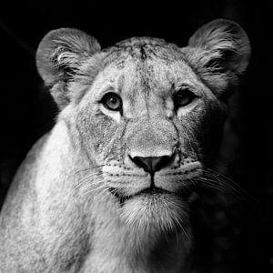Lioness van