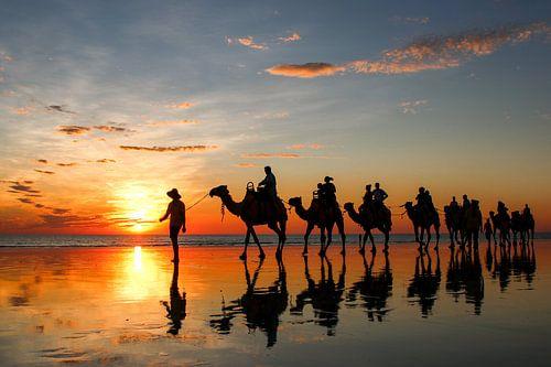 Zonsondergang met kamelen op het strand. Broome, Australië