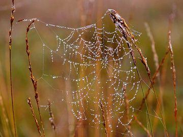 World Wide Web (Spinnenweb met druppels) van Caroline Lichthart