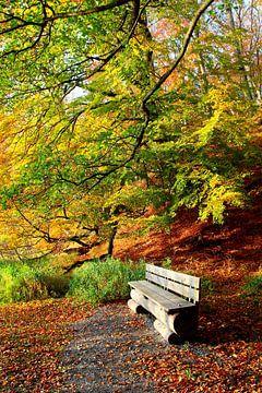 Ein Plätzchen im Herbstwald von Ostsee Bilder