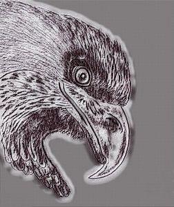 Eagle ( Zeichnung geändert )