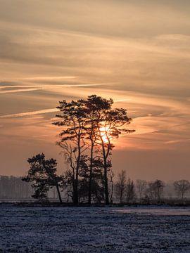 Winter scene met sneeuw bedekte wetland en kleurrijke sunrise_2 van Tony Vingerhoets