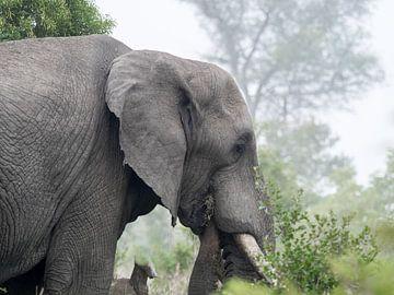 L'éléphant pendant un safari sur Karin vd Waal