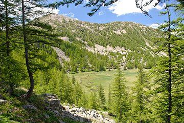 Provence Parc National Du Mercantour rivier van Rene du Chatenier