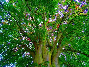 Tree Magic 142-A van MoArt (Maurice Heuts)