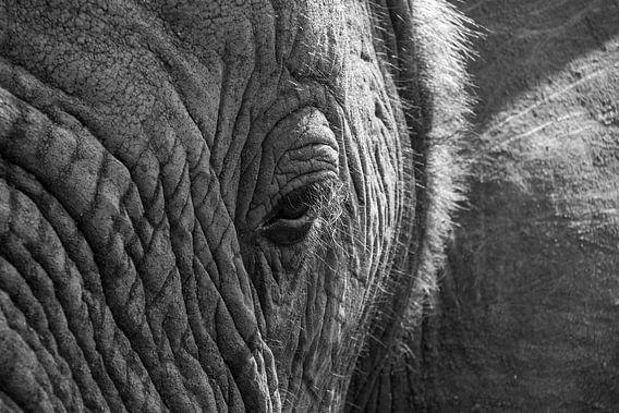 Eye of an Elephant van Kim Paffen