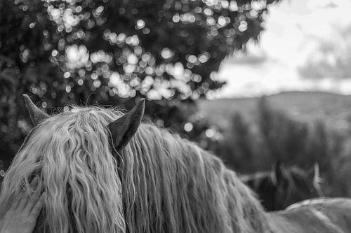 Aaien van een paard in zwart wit