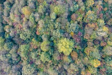 Herfstkleuren in het bos van Jeroen Kleiberg