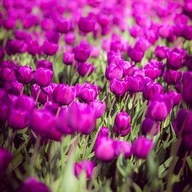 Tulpen von Pascal Raymond Dorland