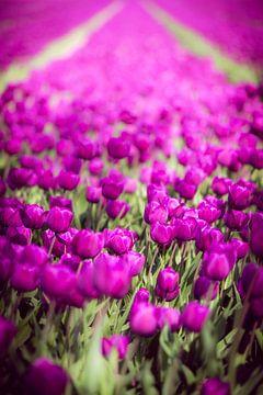 Tulpen van Pascal Raymond Dorland