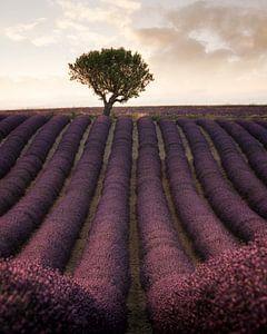 Lavendelvelden in Frankrijk van Stefan Schäfer
