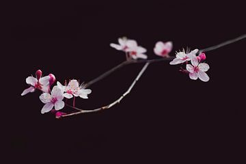 Very beautifull blossom van