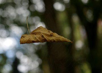 Blaadje in een spinnenweb van Anne van de Beek