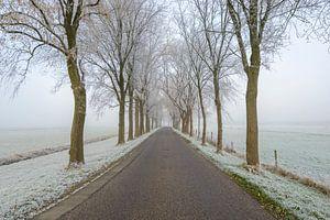 Dijkweg door een mistig landschap met rijk op de bomen en velden van Sjoerd van der Wal