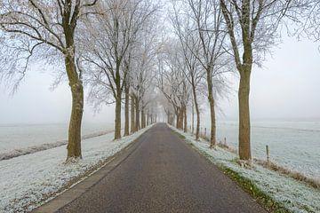 Straße durch eine eisige Winterlandschaft während eines nebelhaften Morgens von Sjoerd van der Wal