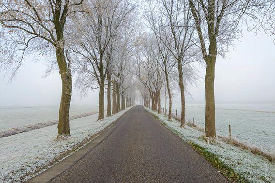 Dijkweg door een mistig landschap met rijk op de bomen en velden