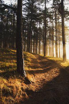 Nationaal Park Zuid-Kennemerland 001 van Gerhard Niezen Photography