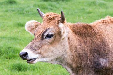Portret van bruine koe met hoorns. van Ben Schonewille